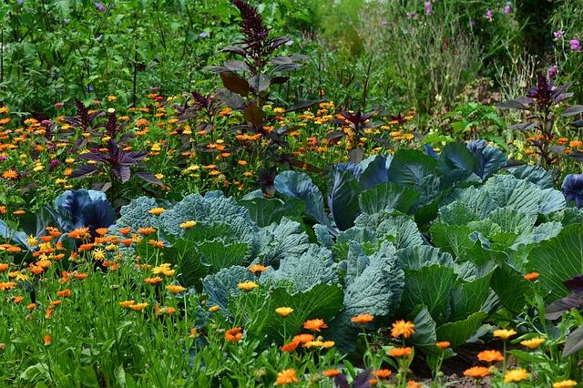 pěstování zeleniny