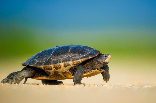 želva na souši
