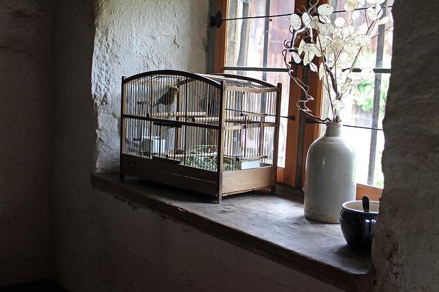ptačí klec na okně